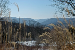 Gap:Winter:Grasses